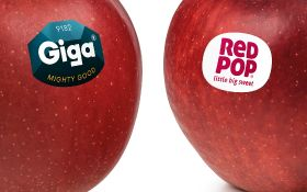 Giga and RedPop apples ready to roll