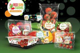 Red Sun Farms sets out growth plans