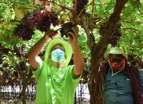 South Africa's China grape promo