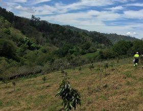 Spanish avocado production moves north