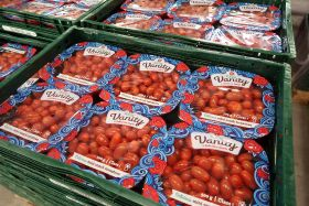 RedStar denies migrant labour park report