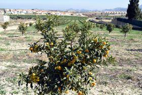 Bio Campojoyma launches organic kumquat line