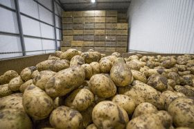 Uncertainty slows Scottish potato sector