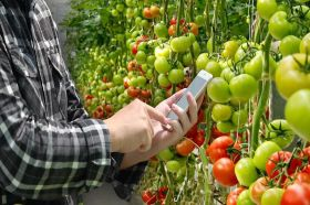 WayBeyond launches tomato tech