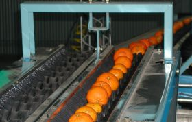 Uruguayan citrus campaign still on track