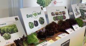 Enza Zaden presents leafy innovations