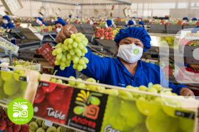 Migiva Group signs grape deal with Hazel Tech