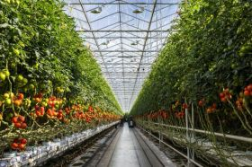 Totam Seeds backs Global Tomato Congress