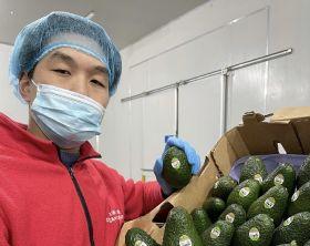California avocados land in China