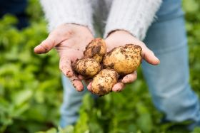 Eat local helps Pembrokeshire spuds