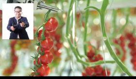 Tomato tech takes centre stage