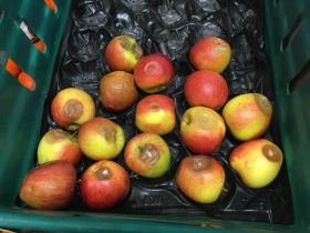 Total Produce Sheffield fined for rotten fruit