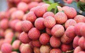 Japan grants GI approval to Vietnamese lychee
