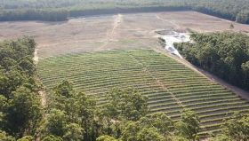 R&D funds support Alterra avocados
