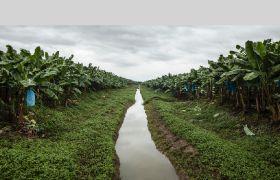 Chiquita launches carbon programme