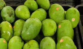 Indonesians urged to consume more fruit
