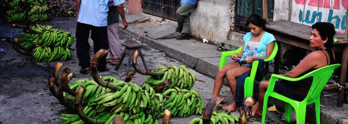 Suspected TR4 case on Peru banana plantation
