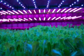 Scottish indoor growing systems destined for UAE