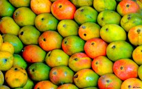 Collaboration allows mango traceability in India