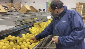 Salix Fruits kicks off Argentine lemon season