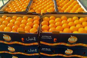 Growth revitalising Egyptian sector