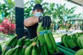 Equifruit helps Longo's switch to Fairtrade