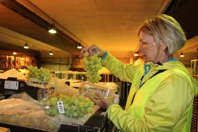 "Koper anticipates ""promising"" Egyptian grape season"