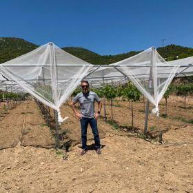 Jupiter pioneers new grape varieties