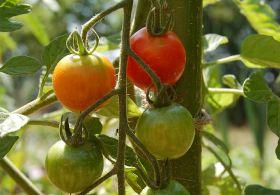 Current crises threaten UK food security, says NFU
