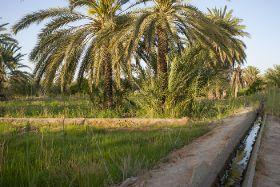 SanLucar wins CSR award in Tunisia