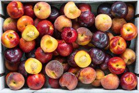 Hortgro closes 'near perfect' stonefruit season
