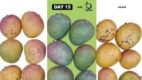 Mangoes get Apeel protection
