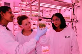 Avocado rootstocks breakthrough for Australian scientists