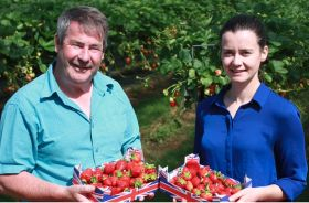Tesco discounts strawberries after glut