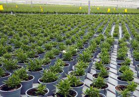 Herbs turn over a new leaf