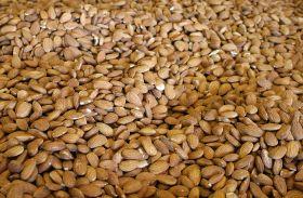 California almonds set new records