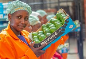Eosta hits Living Wage avocados milestone