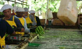 Fairtrade Base Wage for bananas
