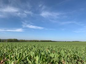 UK growers committed to net zero, NFU says