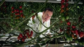 Costa teams up for tomato study
