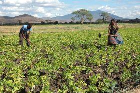 Tanzanian farmers get Covid support