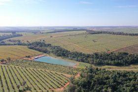 Halls reports good progress on Brazilian avo supply