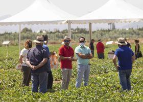 BASF showcases melon novelties