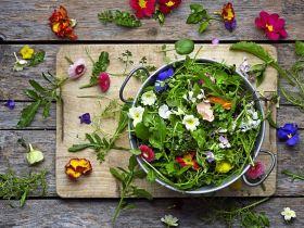 'No lettuce' salad wins top organic award