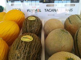 HM Clause, Hazera showcase melon novelties