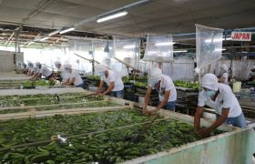 Banana battle continues for Philippines