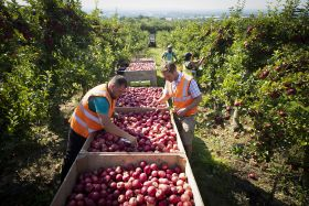 New R&D grants for green hort projects in Kent