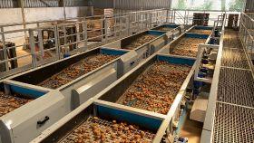 Cornish potato grower invests in new grading facility