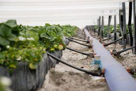 Irrigation win for Queensland growers