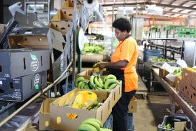 Ausveg calls for more Pacific Island workers